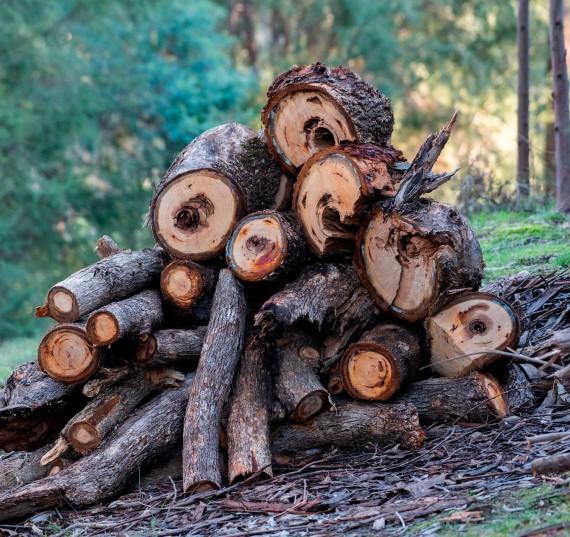 madera_2